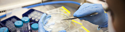 The Bioethical Use of Stem Cells in Research and Therapy
