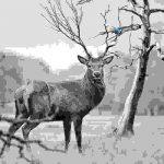 Deer with multiple stags